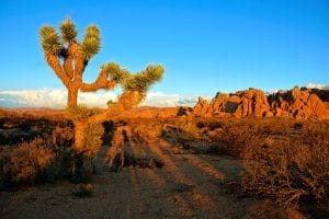Joshua Tree National Park, Palm Springs
