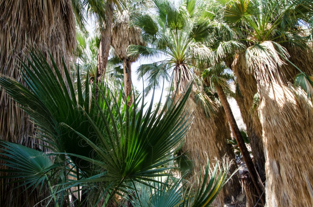 Appreciate natural beauty on these Day Hikes in Palm Springs